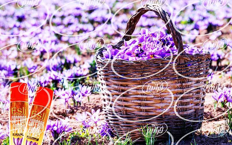 قیمت خرید بهترین پودر زعفران مصطفوی
