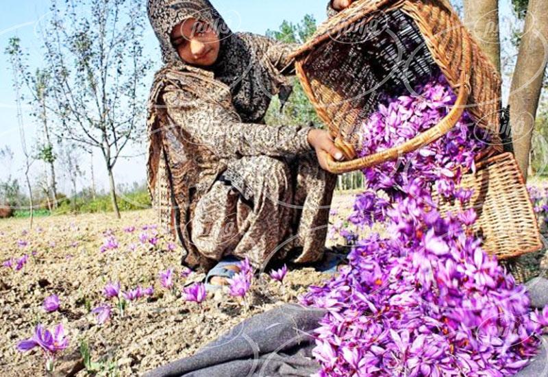 خرید 1 مثقال زعفران کادویی و وکیوم