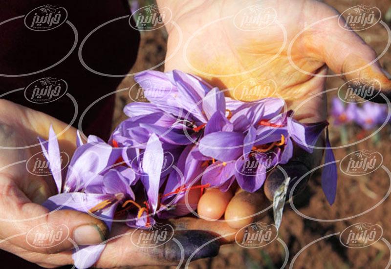 فروشگاه اصلی زعفران تربت حيدريه