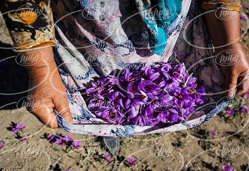 قیمت زعفران فله ای در سایت های اصلی