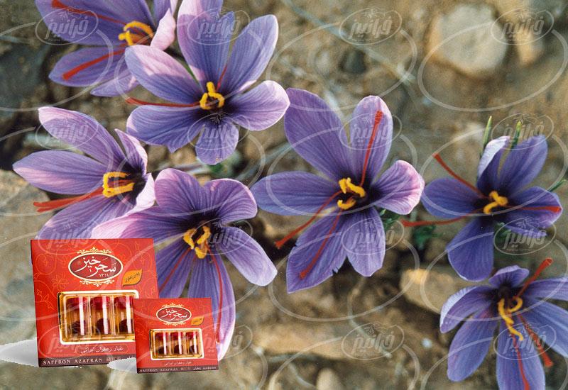 صادرات زعفران یک مثقالی سحرخیز به باکو
